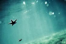 Underwater adventure / by Crystal Church