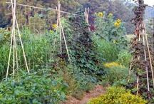 Garden Ideas / by AbbynHayleys Grandma