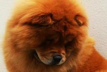 I want a dog!!! / by Shan NA