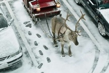 Christmas decoration / by Maria Dimitrova-Georgieva