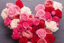 Valentine's Day / Flowers and fun ideas for Valentine's Day to show your love on this special day! Visit our site for other gift ideas: http://www.flowermuse.com/valentines-day-flowers.html / by Flower Muse