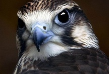 Feathery Flight / Birds of All kinds. / by Sharyn Crawford
