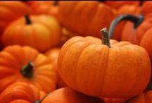 all things pumpkin / by jamie gwynn