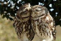 love.heart.love / by jamie gwynn