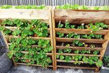 DIY Gardeners Tips / by Kathleen Hoover