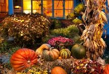 Fall Decorations / by Cindie Terry