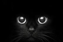 black / by Catherine / Snow Daisy Studio