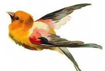 Birdies / by Catherine / Snow Daisy Studio