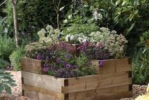 Gardening / by Sally Robinson