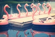Flamingos / by Emily Baker