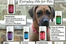 Essential Oil - Pets / by Bill and Stephanie Norman