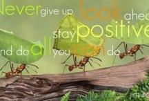 Encouragement, Positive Thinking, Affirmations/afirmacións / Affirmations/afirmacións / by Cynthia Foley
