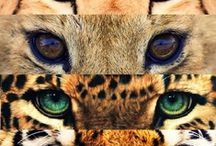 All Things Animal Print! / by Katy Bunch