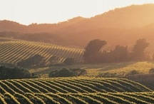 Napa Valley / by ResorTime.com