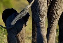 elephant love. <3 / by Brittani Hovland