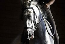 Chevaux - Dressage - / by Ysabel Pages