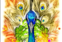 Color me peacock! / by Kirsten Shawn