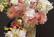 FLOWERS AND PLANTS / by Jennifer York