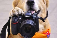 Shoot Me / Tips, tricks & essential info for better photos. / by Janet