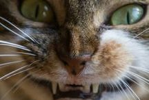 Cat Lady / by Mark Wunderlich