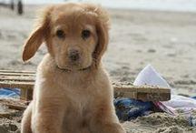 Gimme that dog! / by Jody Slagle