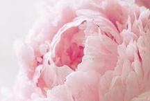 Flowers / by Angela Singleton Photography