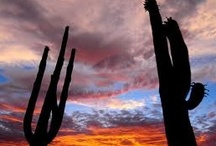 Arizona  / We love Arizona.  Our home. / by Tanque Verde Ranch