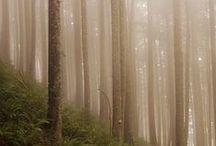 Woods / by Meta B
