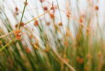 Grass / by Meta B