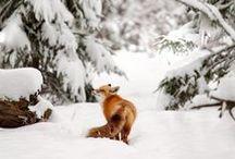Winter / by Meta B