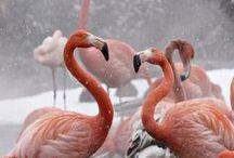 Flamingos / by Meta B
