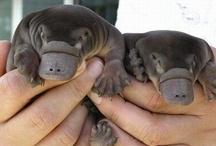Cutie Pies! / by Meagan Waters