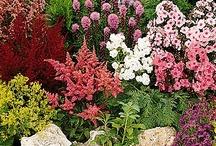 Garden ideas / by Susi D.