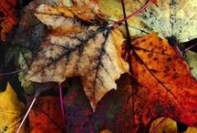 Fall Equinox *)O(* / by Chrysalis Woman