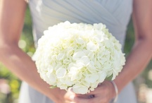 WEDDING / by Haley Beroske