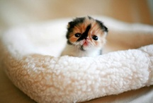 Cuties! / Cute animals make everyone smile! / by Darby Riales