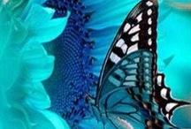 Butterflies / by Kathy Doolittle