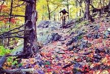 Mountain Biking / by Jessy Ford