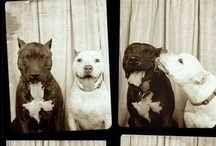 Fight BSL Not Dogs! / by Kimberly Thomas