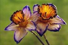 Garden flowers / by Mary Beesinger