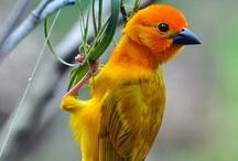 Birds ~ Didn't Know I liked birds so much. / by Jill Milgrim