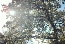 Springtime / by Bethan Morris