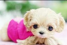 Fotos de perros divertidos / Colección de imágenes interesantes y divertidas de perros. / by Mascota Shop