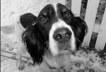 Dogs, Dogs, Dogs... True Love II / by Denise Jeska