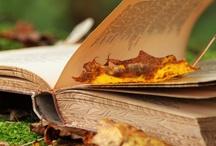the autumn leaves..... / by Jennifer Bohrer