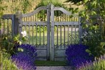 My Secret Garden  / by Marcia Combs