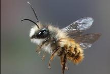 Farm: Bees / by A B