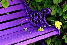Gardens & Flowers / by Kimkarlene