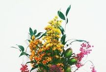florals / by Megan Hild