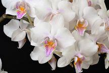 Fleurs-Flores-Blumen / #flowers #fleurs #blumen #flores #fiori / by C. Marie Cline